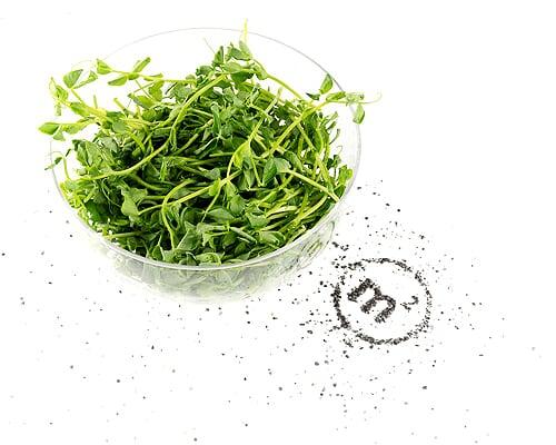 Микрозелень гороха на развес